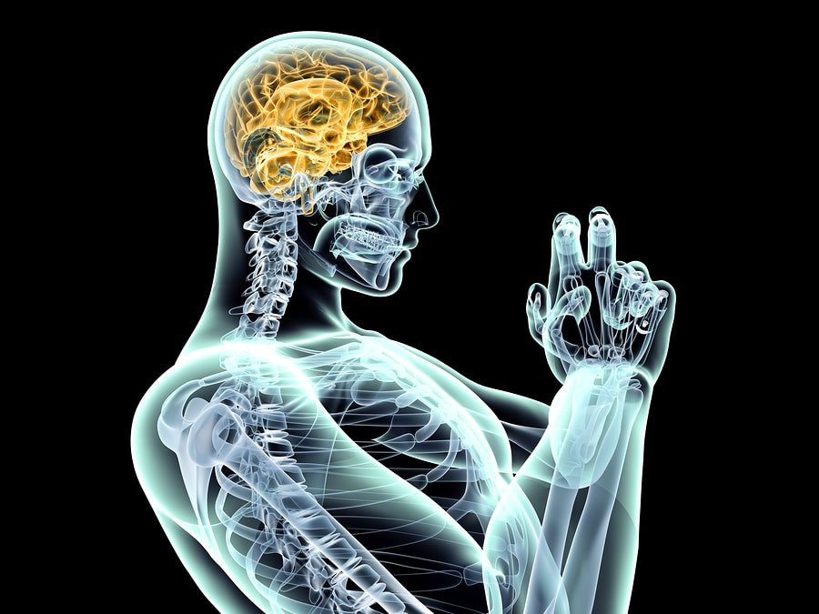 Human and brain